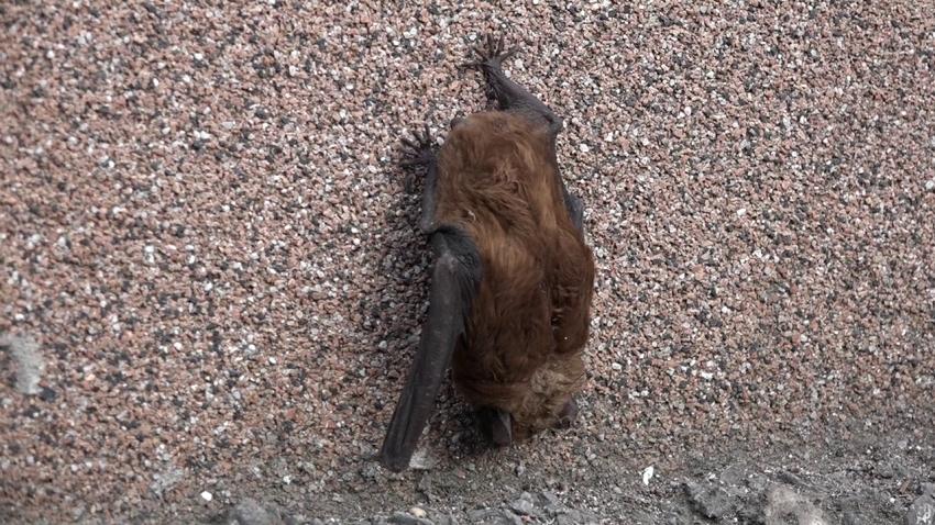 Bude aj Noc netopierov